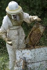 MSU apiary