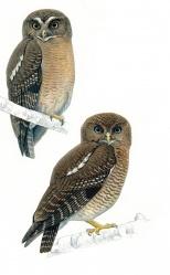 Rasmussen, owl shot